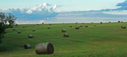 field of tater tots