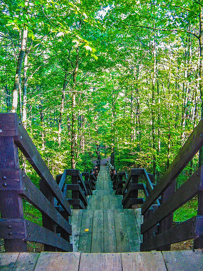 photograph of looking down a wooden stairway in the woods