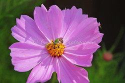 bee and insects on a flower