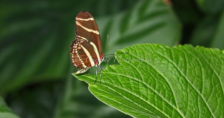 butterfly on a leaf #2