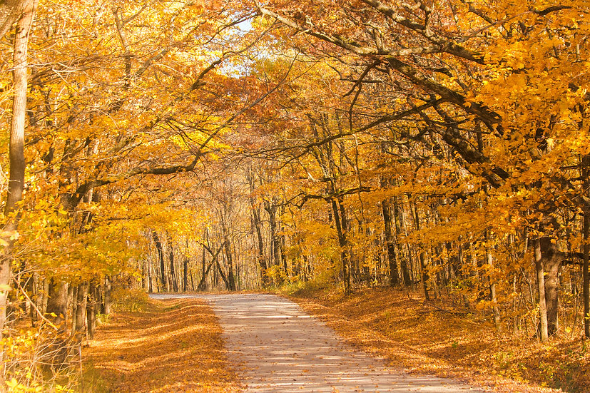 photograph of a road through the woods with fall trees