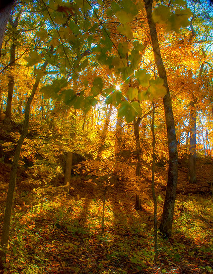 photograph of sunshine through the trees in a fall woods