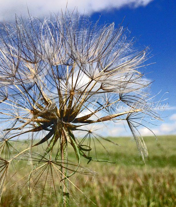 prairie plant #2