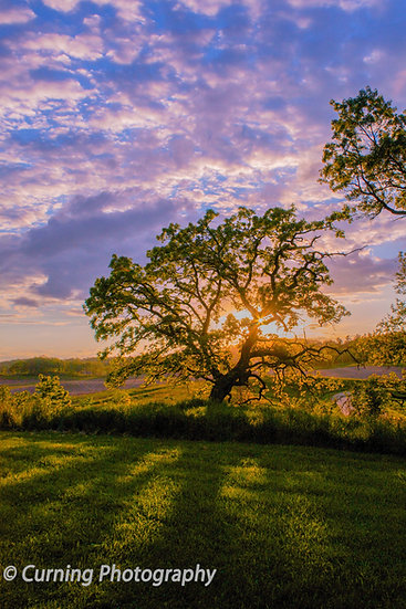 photograph of a big old oak tree at sunset overlooking farm fields in the distance