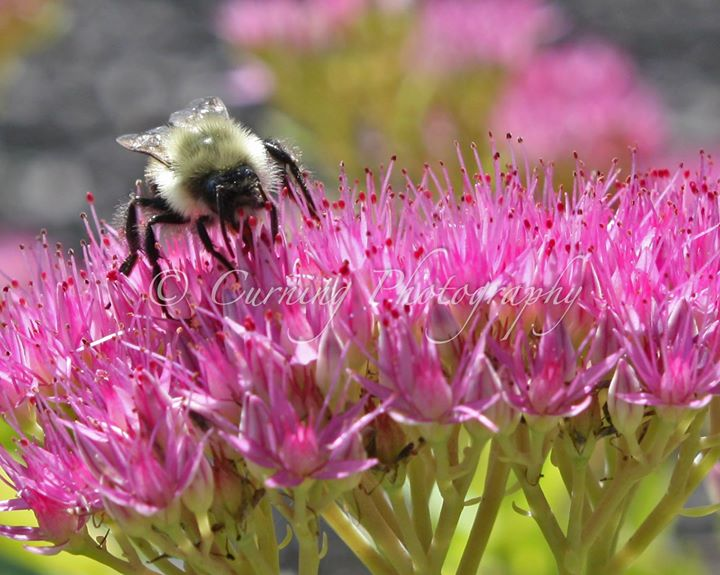 bee on a flower #2