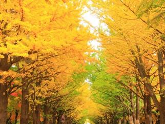すっかり秋ですね