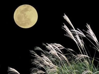 月にまつわるイベント☽