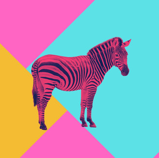Pinkzebra Album Cover.jpg