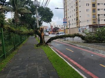 Árvore cai na Avenida 9 de Julho e interdita avenida em São José dos Campos