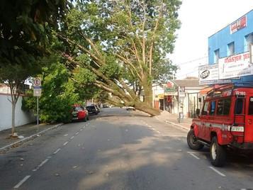 Queda de árvore interdita rua Rubião Júnior por 9h em São José dos Campos
