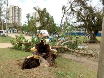 Ventos derrubam árvore no Parque da Cidade em São José dos Campos
