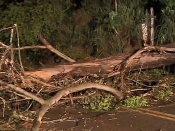 Queda de árvore interdita SP-50 e deixa moradores sem energia em São José dos Campos