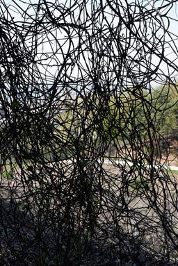 고정남_하이쿠-인천사이다치바#08_아카이벌 피그먼트 프린트_75×50cm_2018.