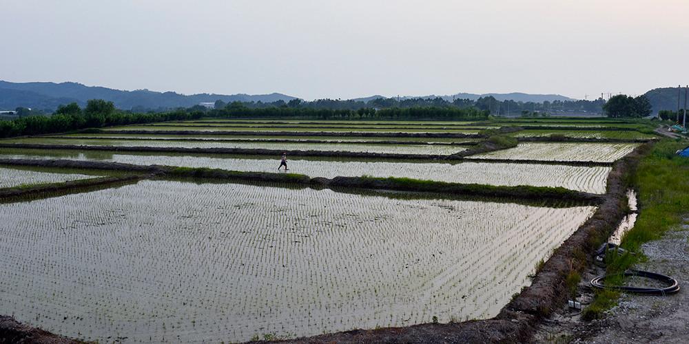 고정남_Suin Railroad#04_아카이벌 피그먼트 프린트_45×90cm_2018.