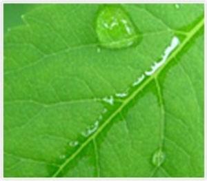 Single Leaf.jpg