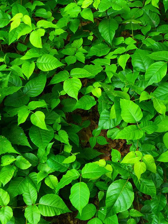 LeafWall.jfif
