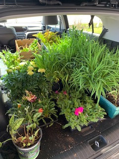 BITC's Annual Planting Party