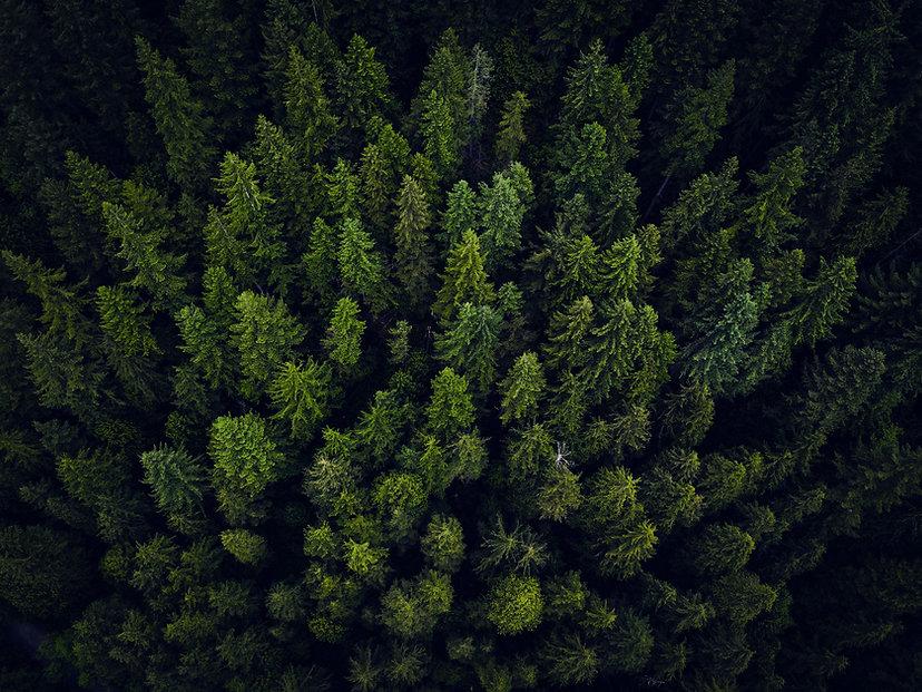 TREES_NUTSHELL.jpg