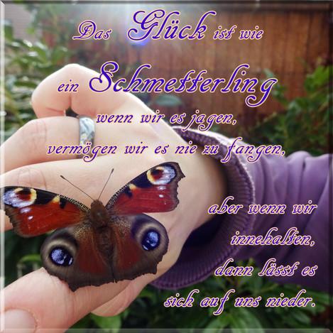Das Glück ist wie ein Schmetterling  wenn wir es jagen, vermögen wir es nie zu fangen,  aber wenn wir innehalten, dann lässt es sich auf uns nieder.