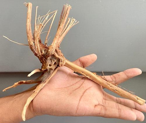SPIDER WOOD WYSIWYG