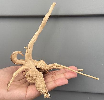 SPIDER WOOD WYSIWYG 122