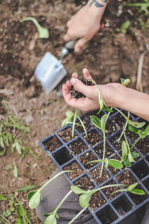 someone planting seeds