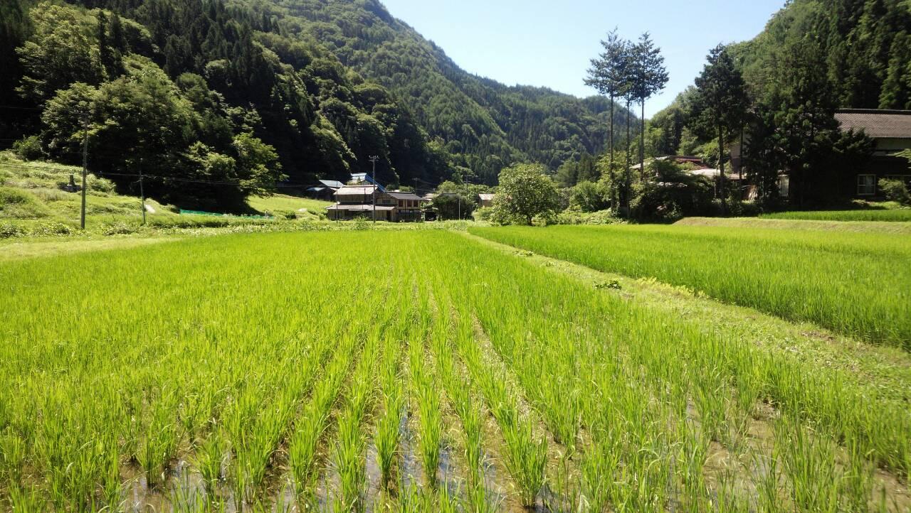 nobushina田