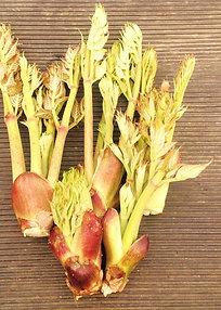 天然 たらの芽 taranome ( AraliaSprout ) 200g