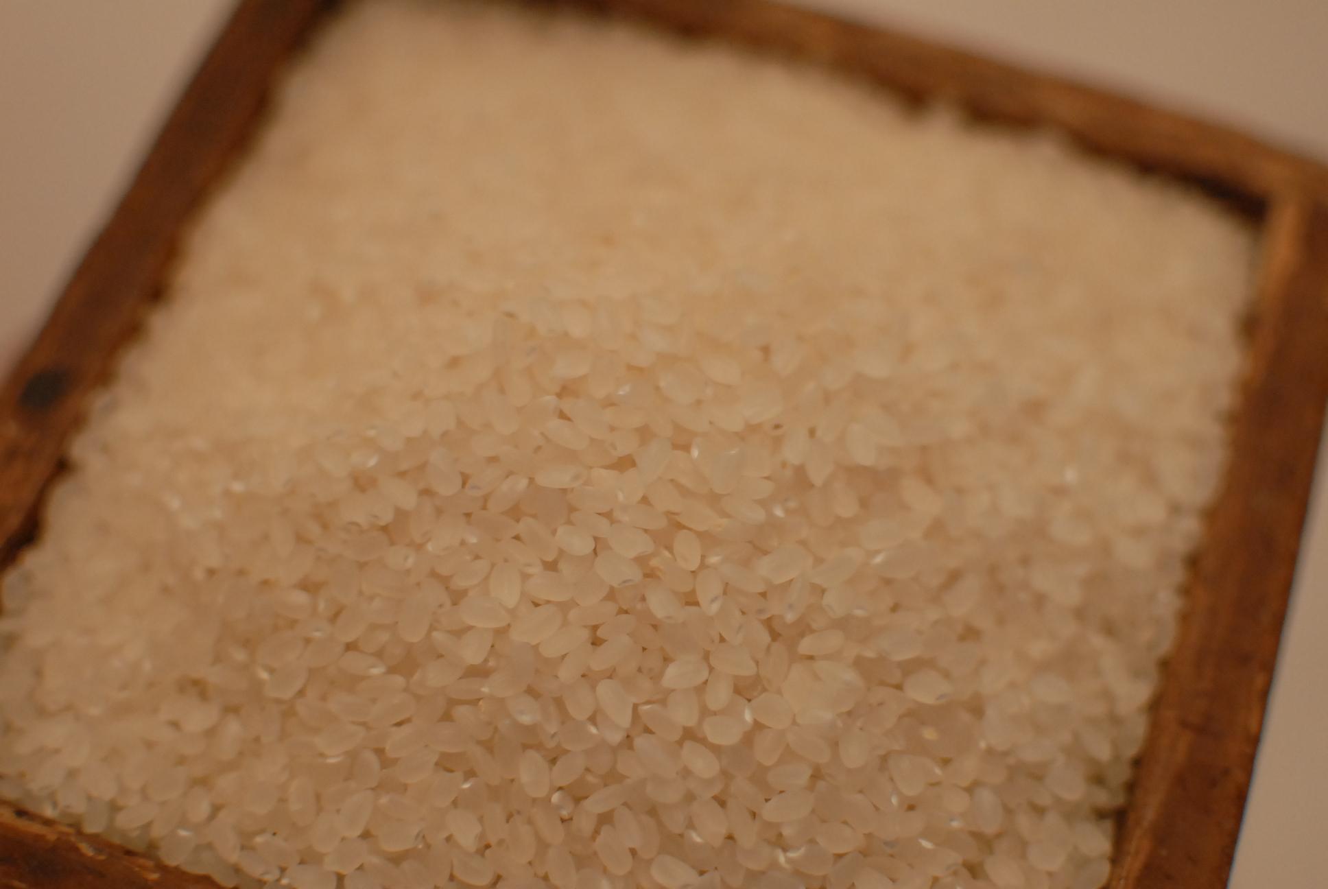 信級 湧水米