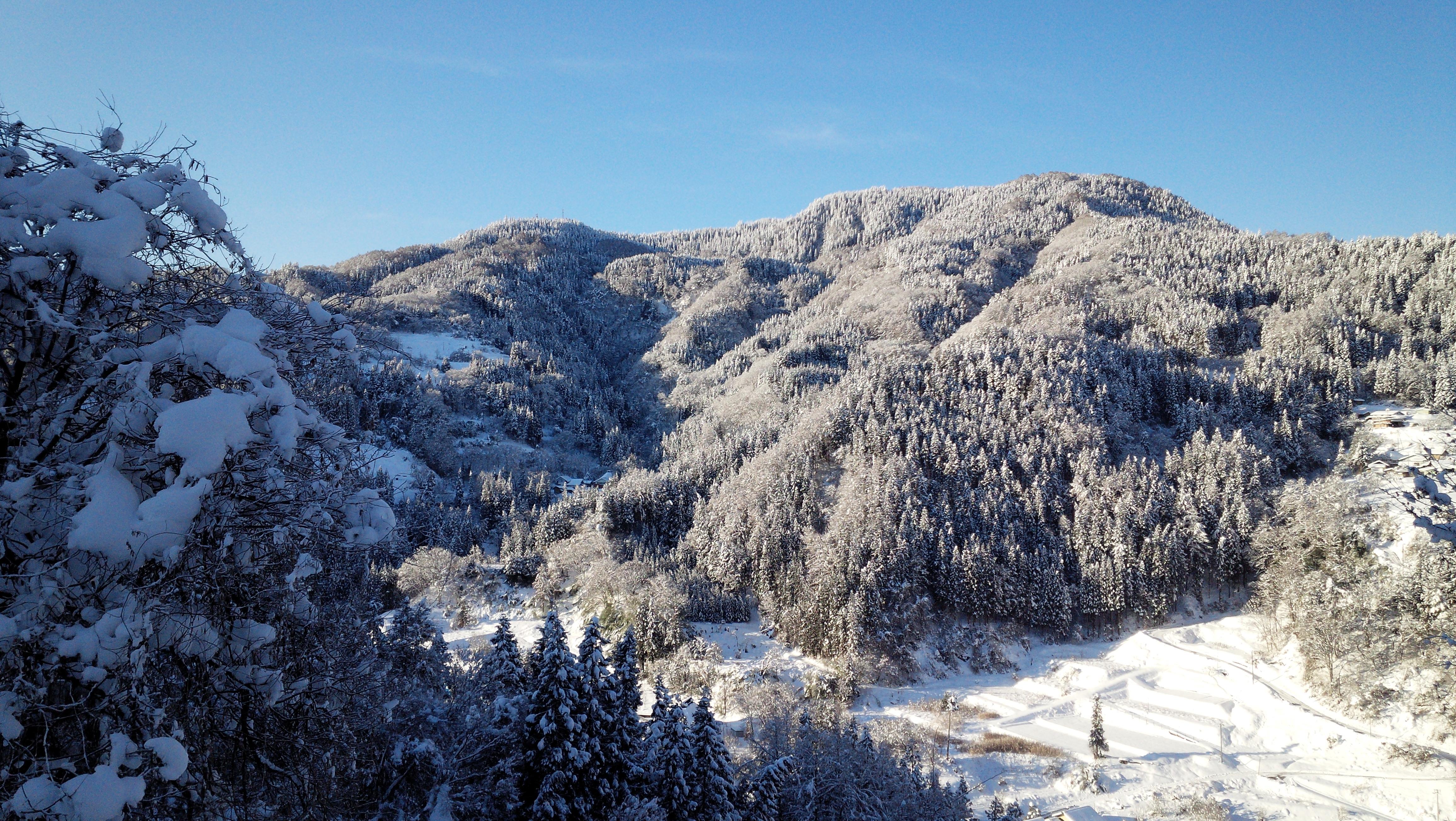 nobushina冬
