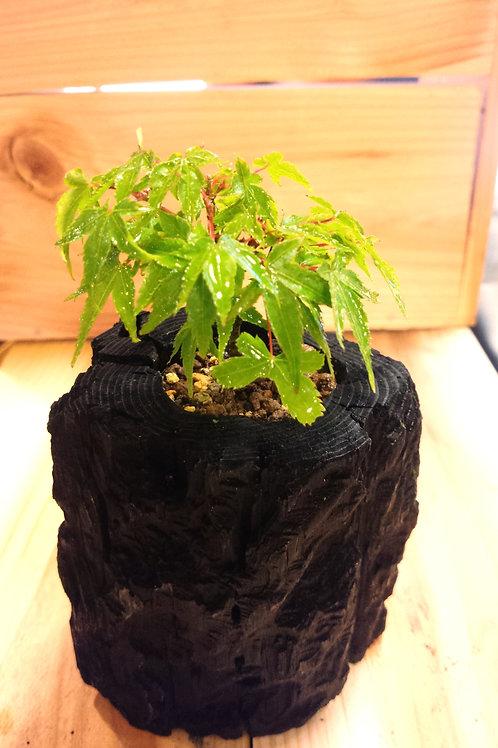 炭盆 楓 kaede 紅葉 momiji