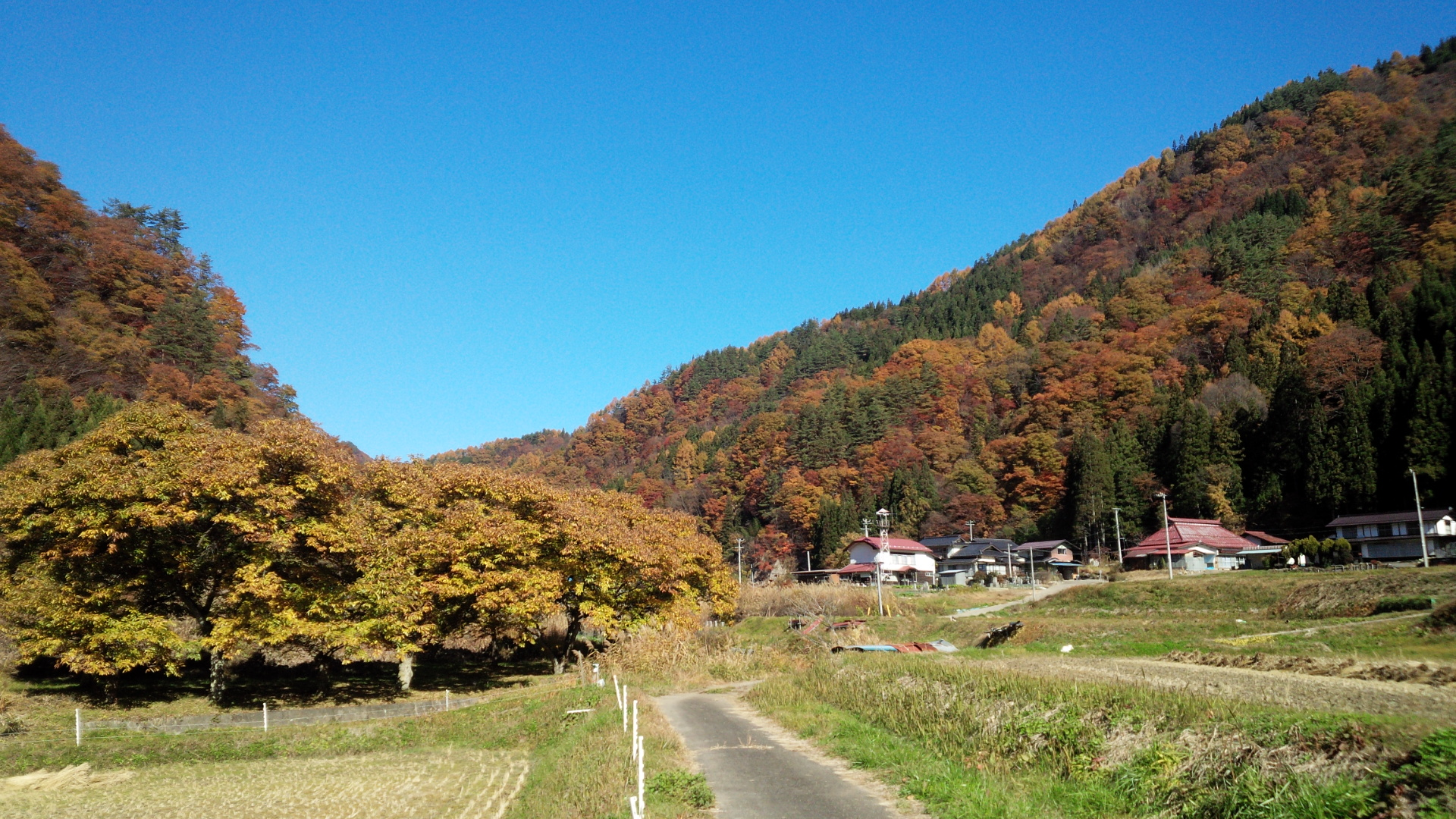 nobushina秋