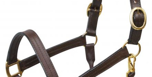 Large leather halter with brass hardware