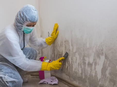 Will mold comeback after remediation?