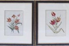 Pair of Horticultural Color Prints