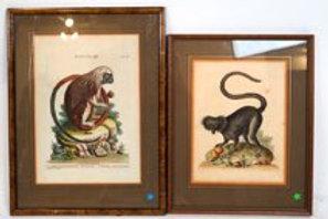 Two Antique Monkey Prints