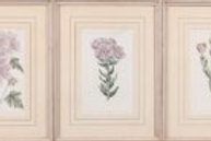 Three Hand Colored Botanical Prints by S. Edwards Published by W. Curtis (1856)