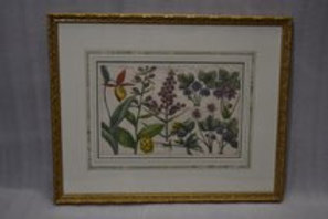 18th cent German Hand colored botanical
