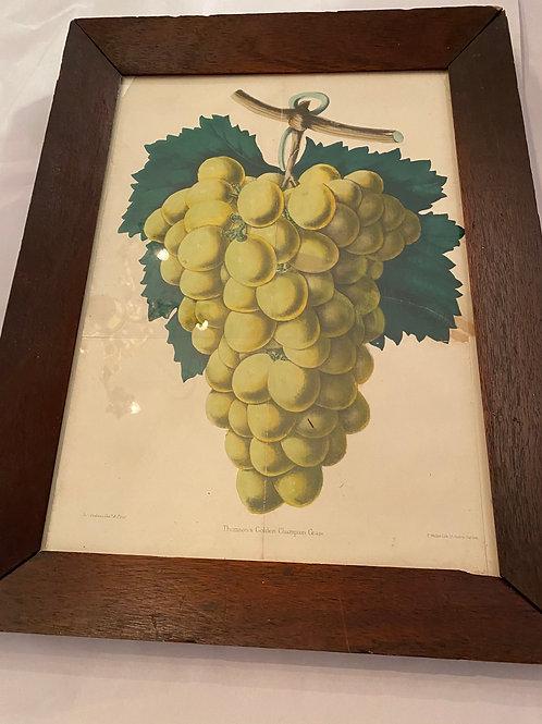 Victorian grape print