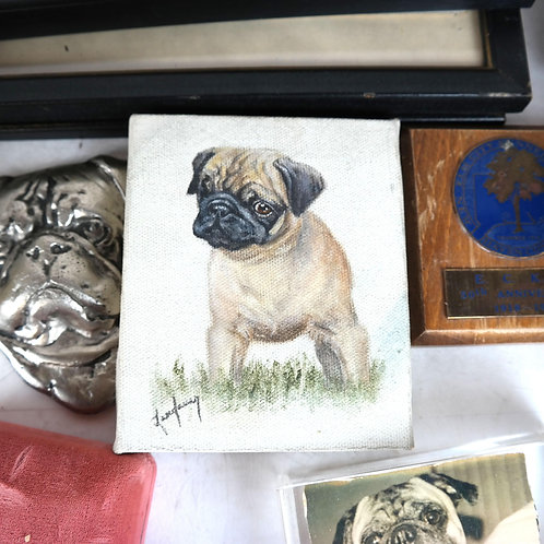 A Large collection Pug photos trophies