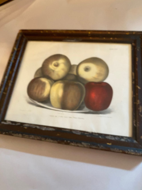 Antique Apple Print