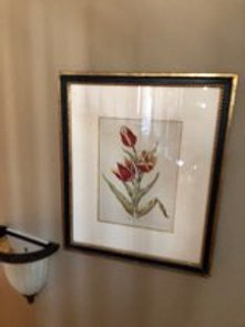 Antique colored engraving of a tulip