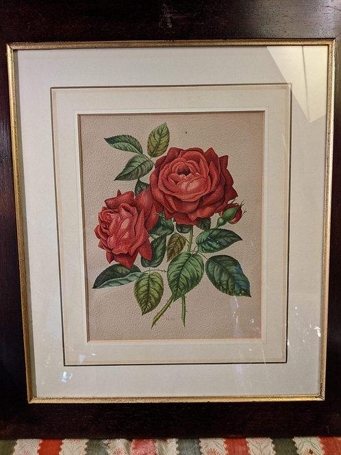 Antique Rose print