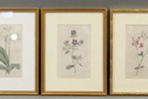 Three Hand Colored Prints by J. Sowerby