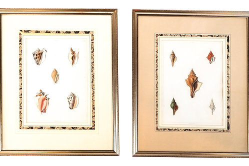 Antique shell prints