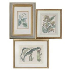Three Various Hand-Colored Horticulture Prints