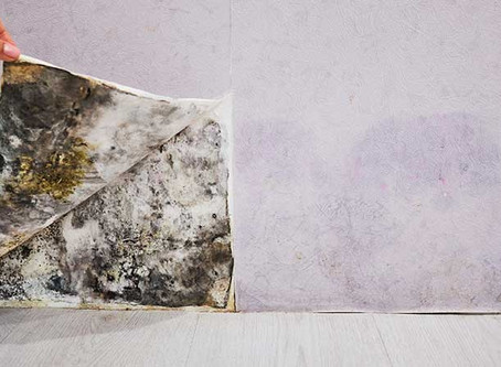 Should You Paint Over Mold?