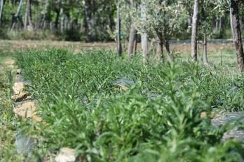 giardino di erika erbe spontanee carso miele tisane marmellate