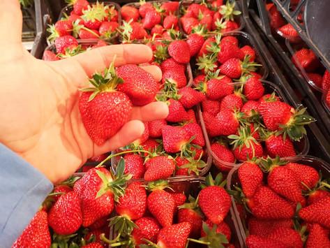 Azienda Agricola F.lli Movio, frutta e verdura di stagione, dal campo alle nostre tavole.