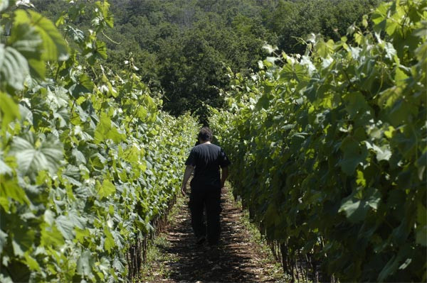 vign e baita sgonico vini locali vitovska malvasia terrano